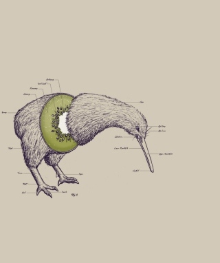 Kiwi Bird Background for 360x640