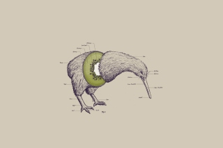 Kiwi Bird Picture for Android, iPhone and iPad