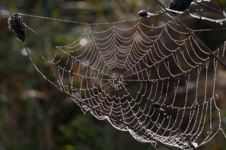 Free Wet Cobweb Picture for Android, iPhone and iPad