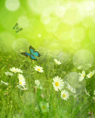 Summer Meadow Background for 240x320
