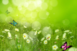 Summer Meadow Wallpaper for Android, iPhone and iPad