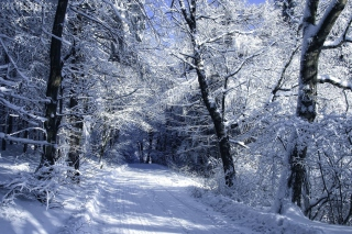 Winter Road in Snow Wallpaper for Android, iPhone and iPad