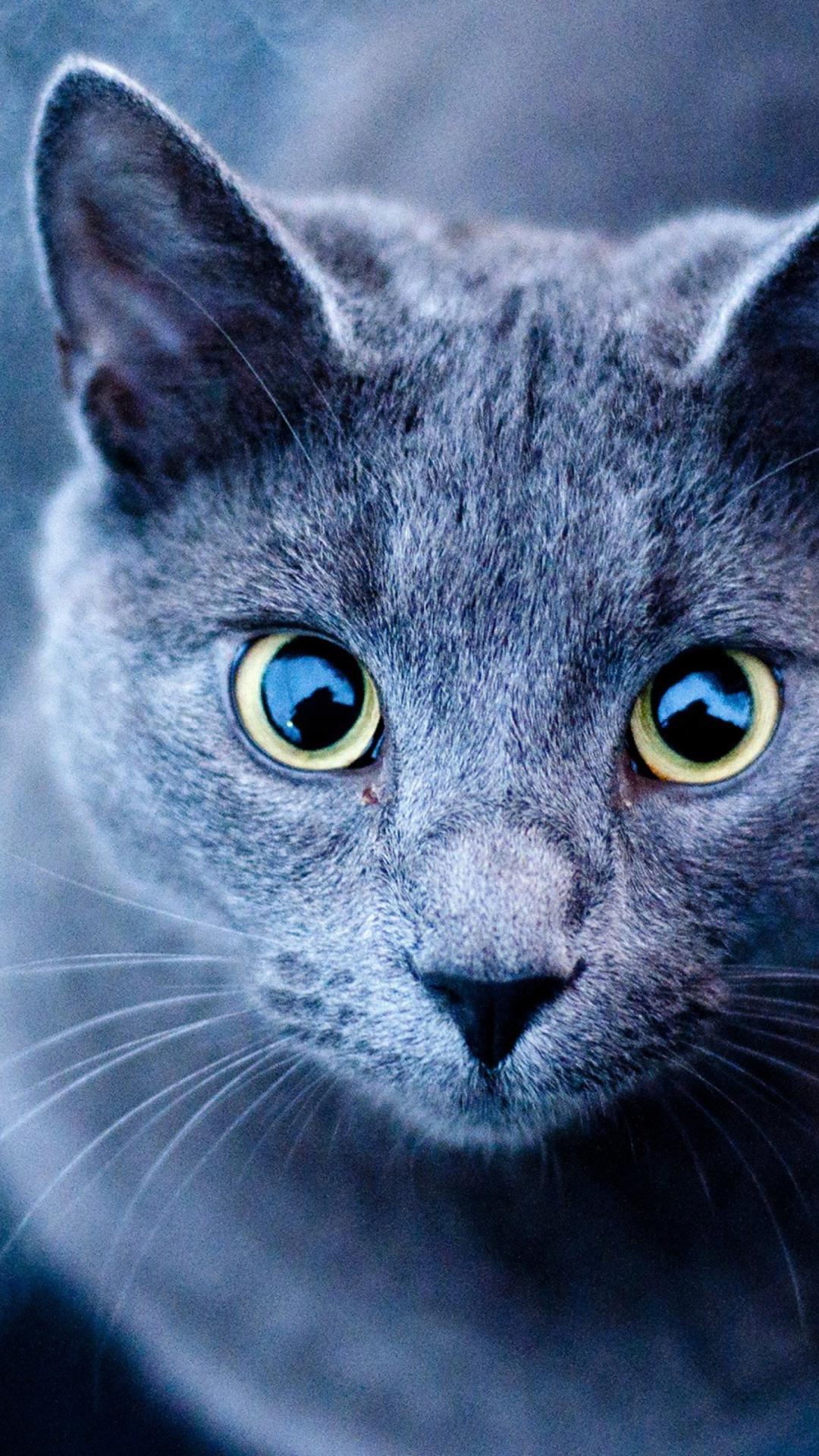 кошки картинки для мобильного нее синие волосы
