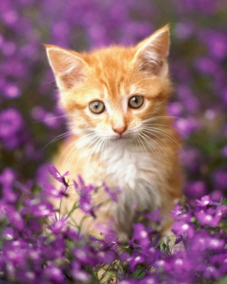 Sweet Kitten In Flower Field papel de parede para celular para 1080x1920