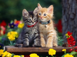 Nice Kittens Wallpaper for Android, iPhone and iPad