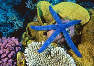 Free Sea-Star From Ocean Picture for Android, iPhone and iPad