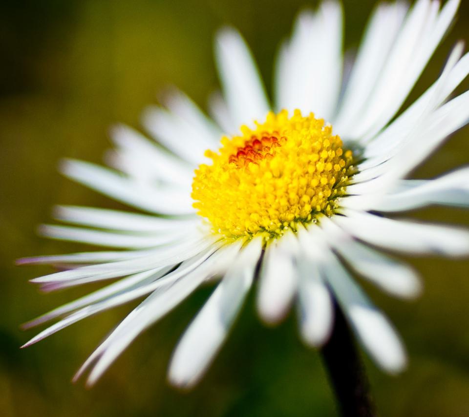 Summer Flower para Sony Ericsson XPERIA PLAY