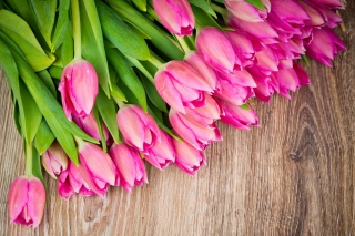 Free Beautiful and simply Pink Tulips Picture for Motorola DROID 3