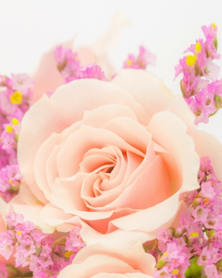 Pink rose bud Wallpaper for Nokia C1-00
