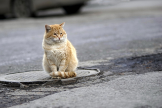 Fluffy cat on the street Wallpaper for Android, iPhone and iPad