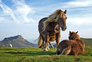 Horse Couple Picture for Android, iPhone and iPad