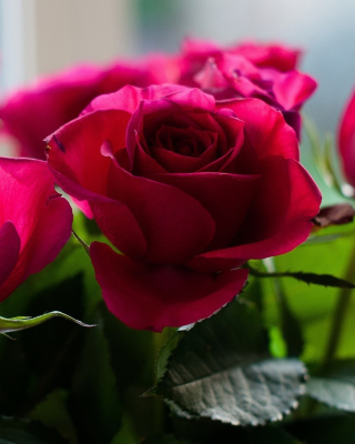 Free Picture of bouquet of roses from garden Picture for Nokia Asha 306