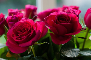 Picture of bouquet of roses from garden Wallpaper for Android, iPhone and iPad
