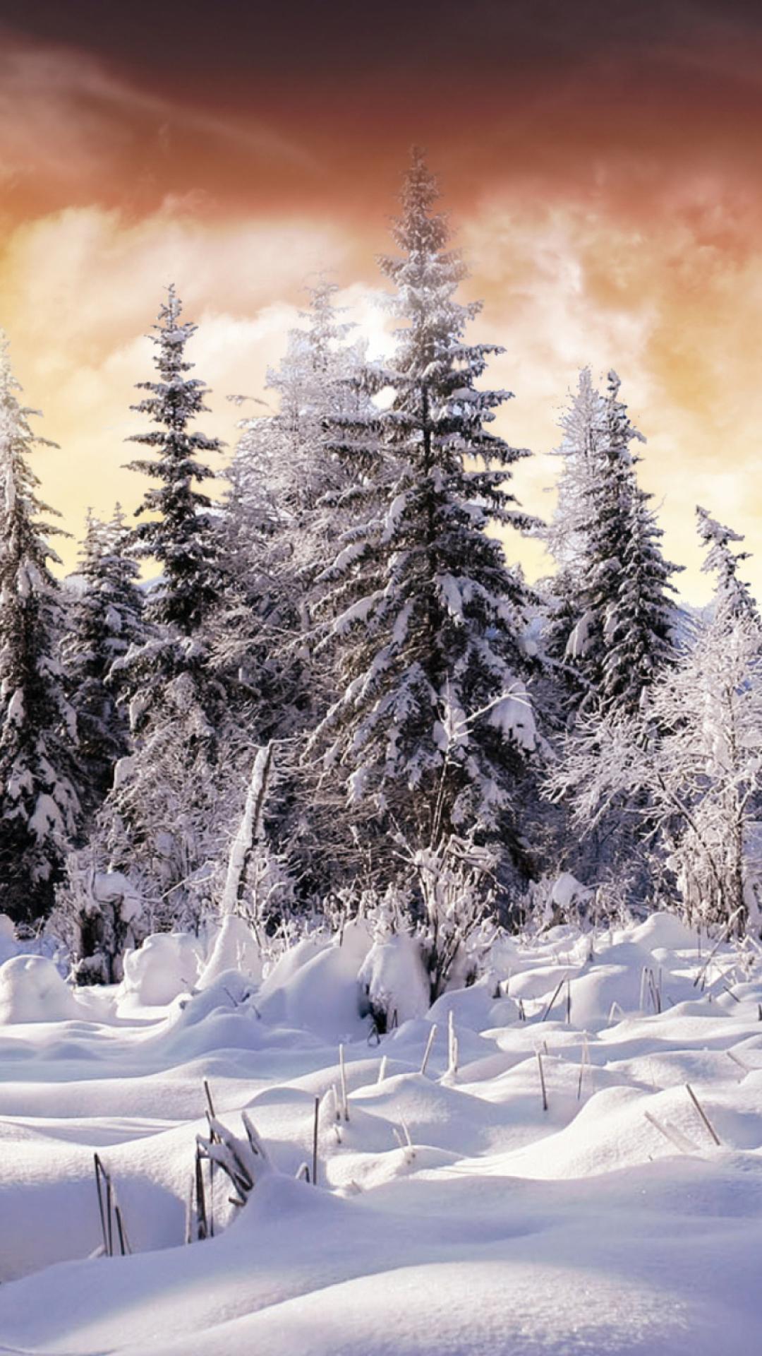 Зимний картинки на телефон