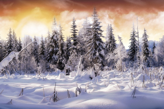 Winter Wonderland Picture for Android, iPhone and iPad