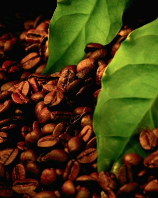Free Coffee Beans And Green Leaves Picture for Nokia C1-01