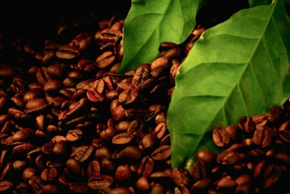 Coffee Beans And Green Leaves - Obrázkek zdarma