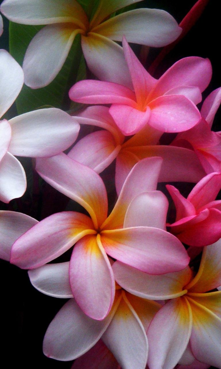 Картинки цветов на телефон андроид, анимация
