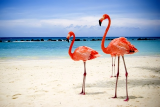 Flamingos On The Beach Background for Android, iPhone and iPad