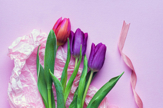 Pink Tulips Background for 480x400