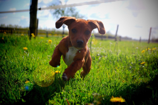 Free Puppy Happy Summer Run Picture for Android, iPhone and iPad