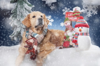 Golden Retriver Background for Desktop Netbook 1024x600