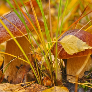 Autumn Mushrooms with Yellow Leaves - Obrázkek zdarma pro 1024x1024