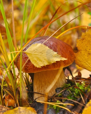 Autumn Mushrooms with Yellow Leaves - Obrázkek zdarma pro 640x960
