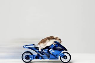 Mouse On Bike - Fondos de pantalla gratis