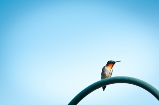 Lonely Hummingbird Wallpaper for Android, iPhone and iPad