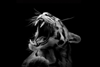 Free Roaring Cat Picture for Android, iPhone and iPad