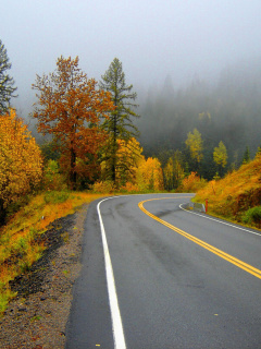 Screenshot №1 pro téma Autumn Sodden Road 240x320