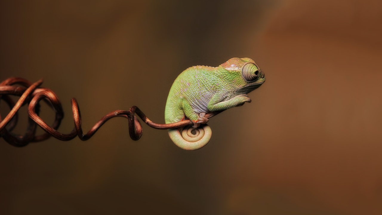 Little Chameleon