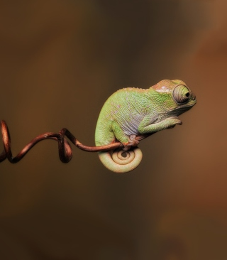 Little Chameleon Wallpaper for Nokia Lumia 800