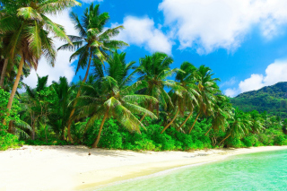 Tropical Landscape and Lagoon HD Background for Android, iPhone and iPad