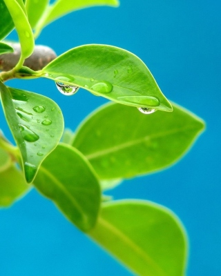 Water drops on leaf Background for iPhone 4S