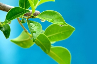Water drops on leaf - Fondos de pantalla gratis para Samsung Galaxy Ace 3