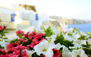 Flowers In Greece Background for Android, iPhone and iPad