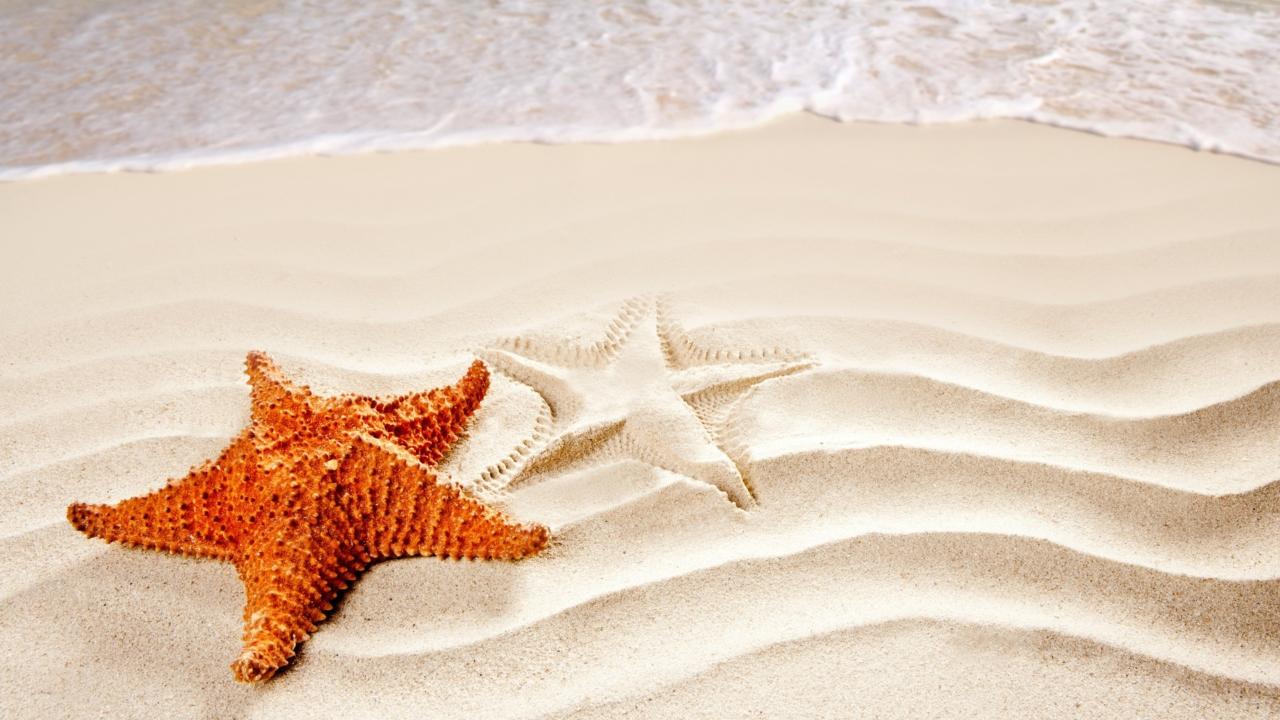 Cool Sea Star
