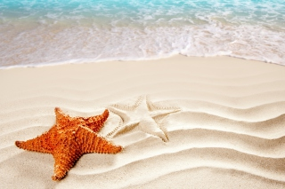Free Cool Sea Star Picture for 1400x1050