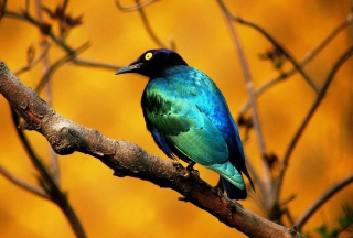 Colourful Bird Picture for Android, iPhone and iPad