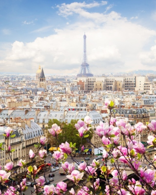 Paris Sakura Location for Instagram Picture for 240x320