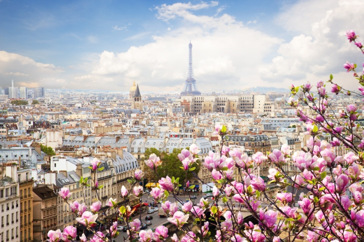 Paris Sakura Location for Instagram wallpaper