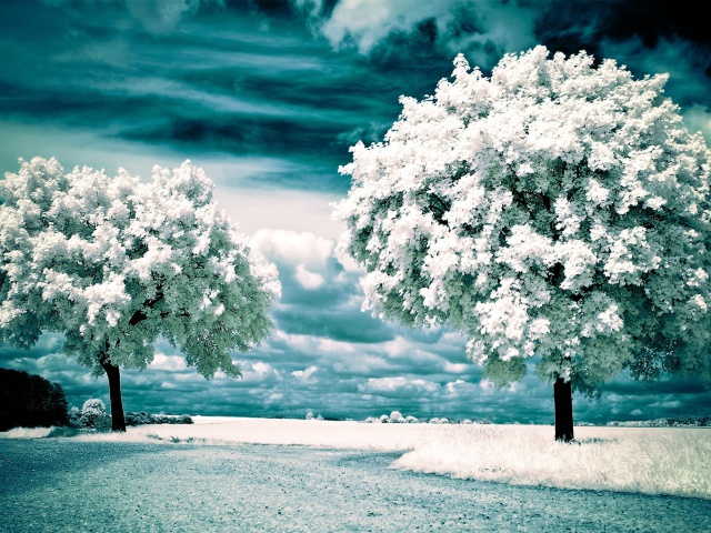 Infrared Trees wallpaper 640x480