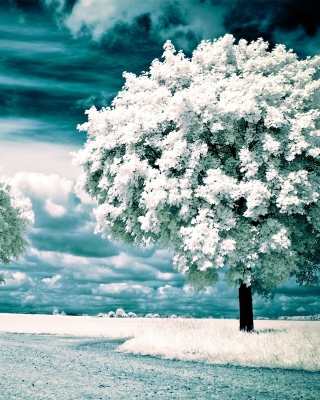 Infrared Trees Background for Nokia C1-01
