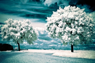 Infrared Trees Background for Android, iPhone and iPad
