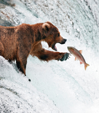 Big Brown Bear Catching Fish sfondi gratuiti per Nokia Lumia 925