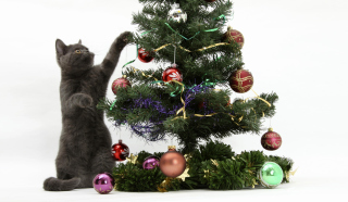 Free Christmas Cat Picture for Android, iPhone and iPad