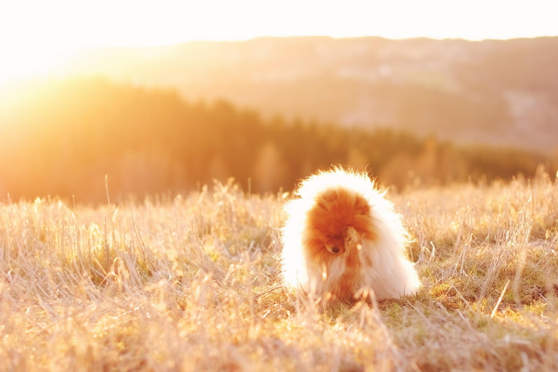 Собака в поле без смс