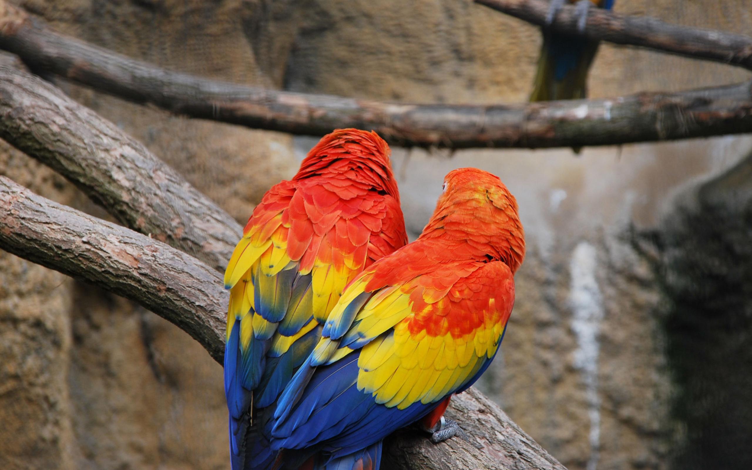 попугай краски рисунок скачать